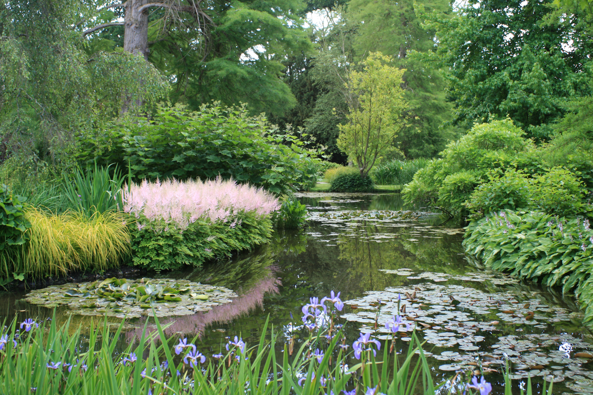 Purple kaboodle longstock park water garden purple kaboodle for How to water a garden