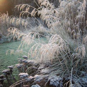 assess-the-bare-bones-of-your-garden-in-winter-1